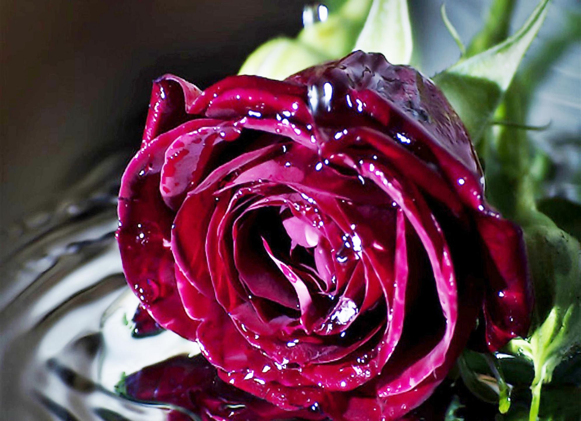 عکس های گل های زیبا